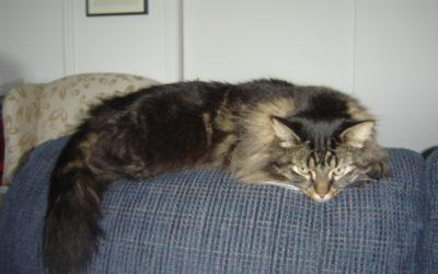 Milou, notre chat, 2 ans avec nous !