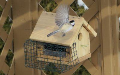 Nos principaux oiseaux // Main birds in our surrounding